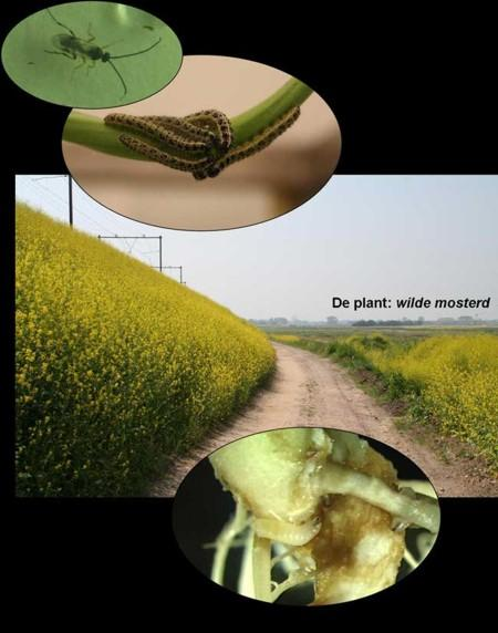 telefone dos insetos biofone telefone verde