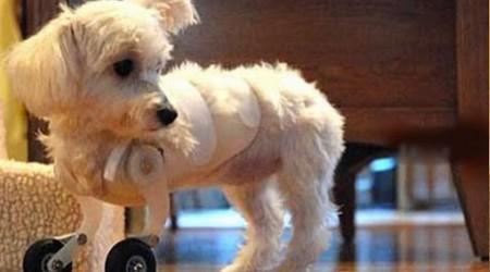 Cachorrinha bionica - HypeScience.com Magazine