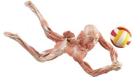 corpo-humano-fatos e curiosidades