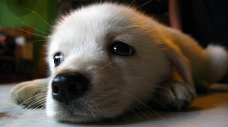 cachorrinho fofo