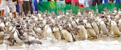 pinguins-rs-patagonia-grande