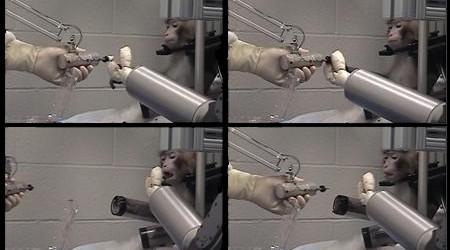 macaco-braco-robotico-g