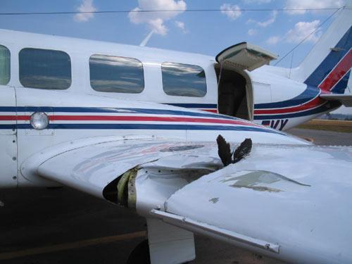 ataque de ave contra avião
