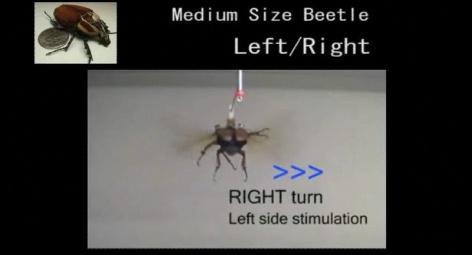 besouro-controle-remoto-grande