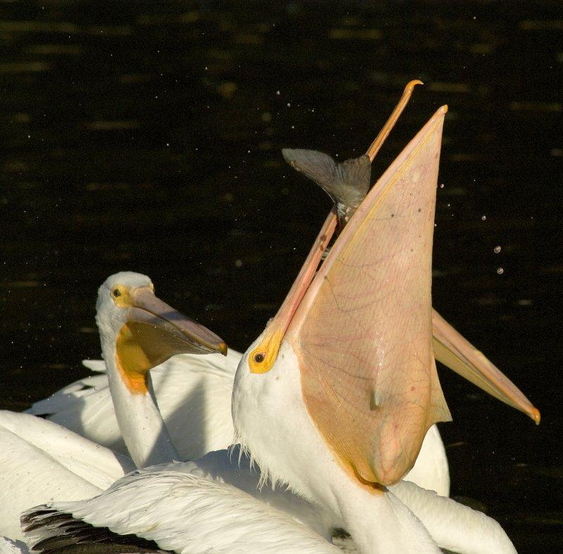 O Pelicano Distribuidora 5 Incríveis fotos...