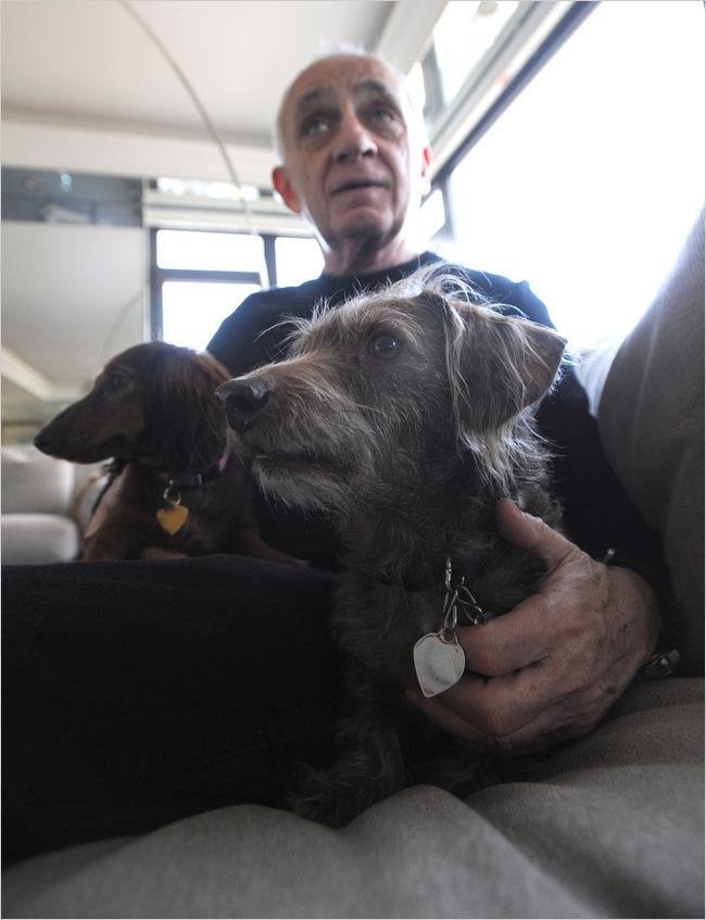 cortar cordas vocais cachorro
