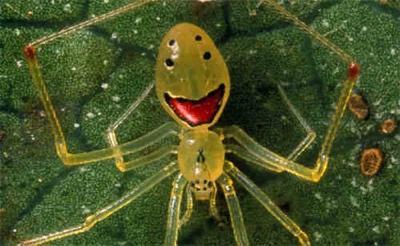 Las 10 más extrañas arañas en el mundo