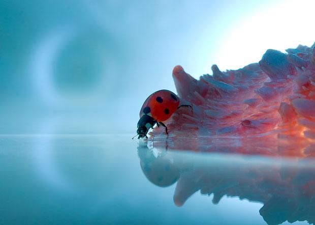 Resultado de imagem para insetos bonitos