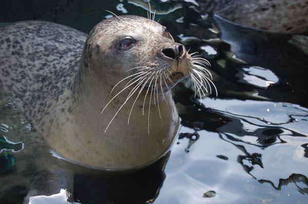 fotos de animais marinhos foca