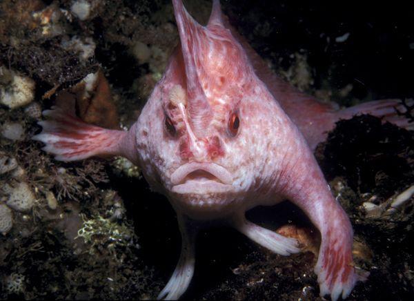 Resultado de imagem para peixe cor-de-rosa de mãos