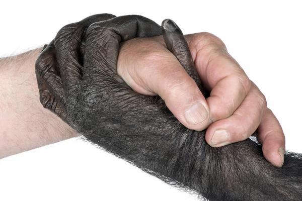 Resultado de imagem para macaco e homem