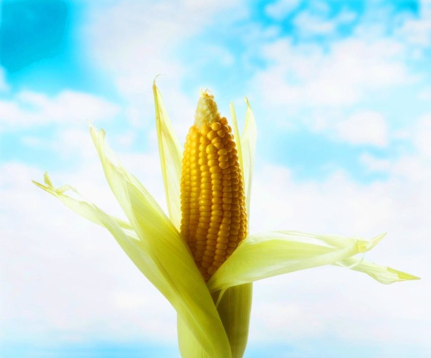 Corncob --- Image by © Royalty-Free/Corbis