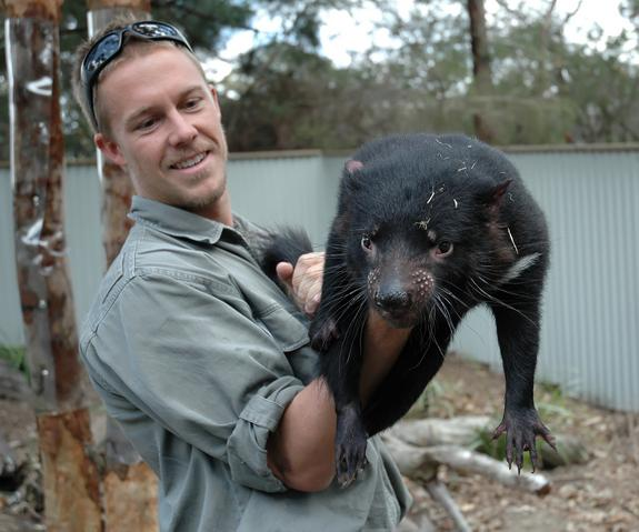 Análise de DNA pode salvar demônios da Tasmânia de câncer altamente mortal