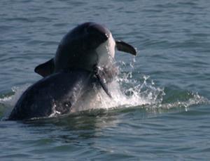 golfinho e boto