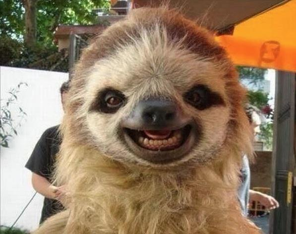 preguiça sorridente