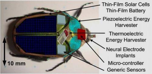 """Cientistas criam """"exército"""" de insetos biônicos"""