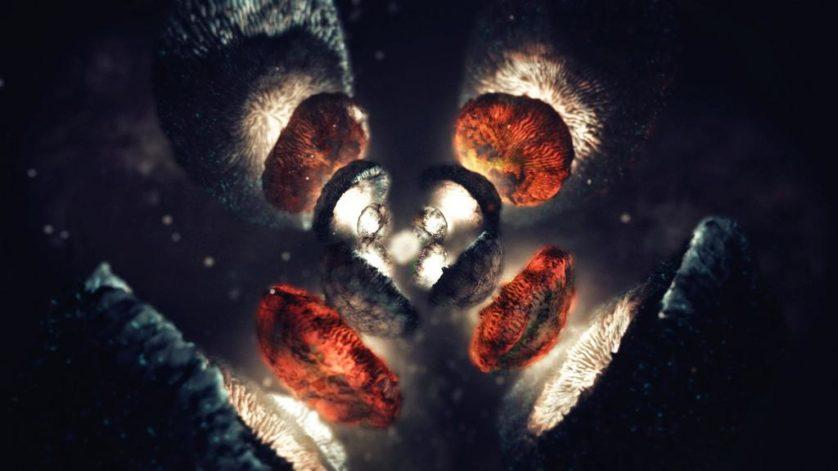 quarks leptons