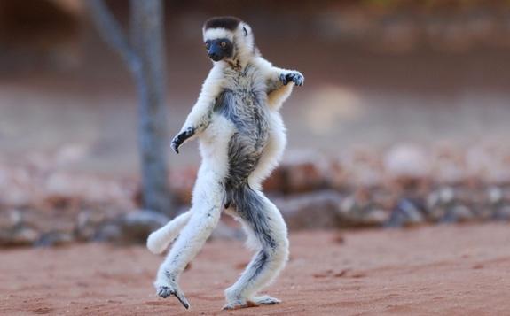 Animais estranhos de Madagascar: 12 exemplos e fotos