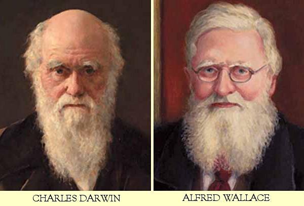 Evolucion, el neodarwinismo
