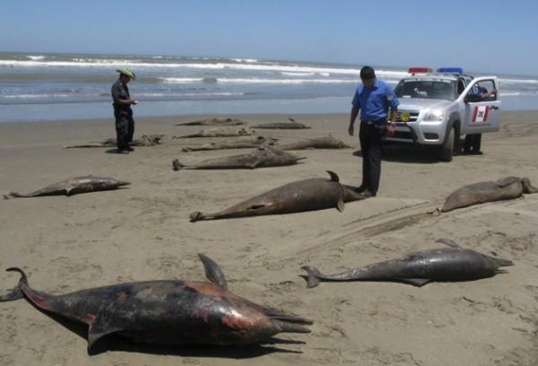 Ninguém sabe por que 877 golfinhos foram encontrados mortos no Peru 0c4549e52dc2600b0d0f6a706700a72d-e1335195004608