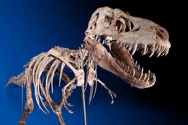 Tyrannosaurus-bataar-ed