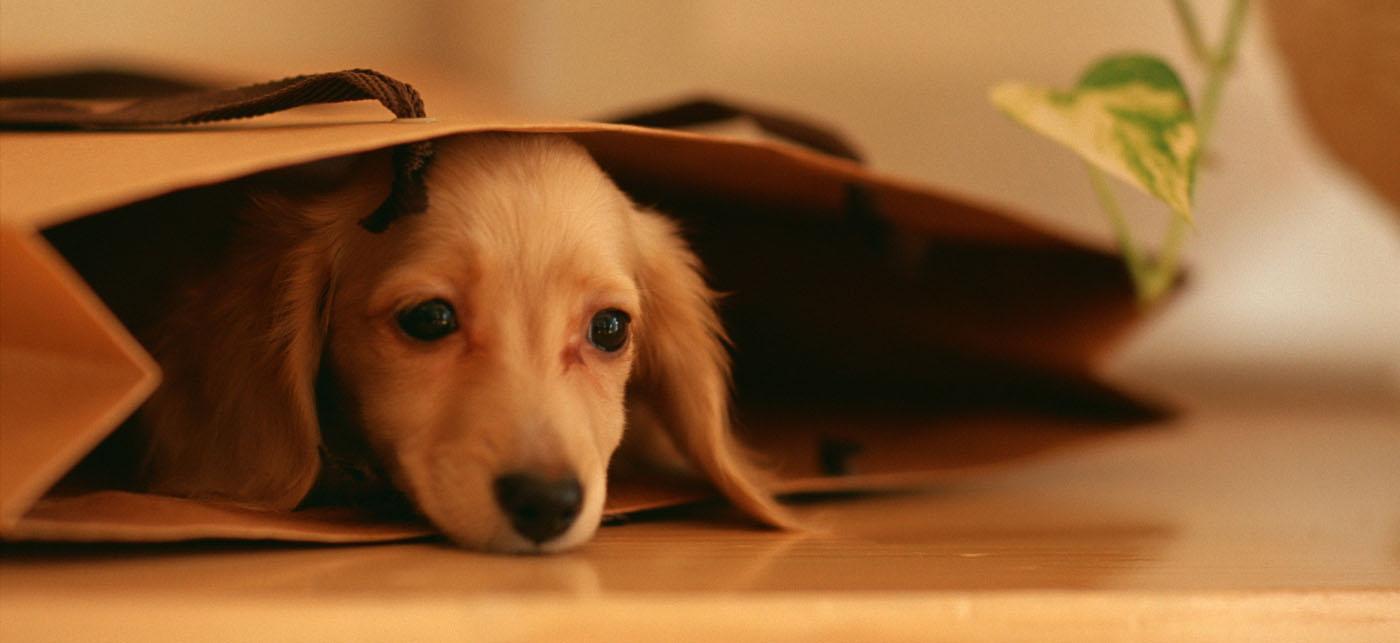 Resultado de imagem para cachorro triste