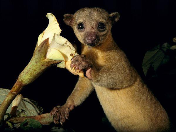 10 criaturas bizarras da floresta amazônica