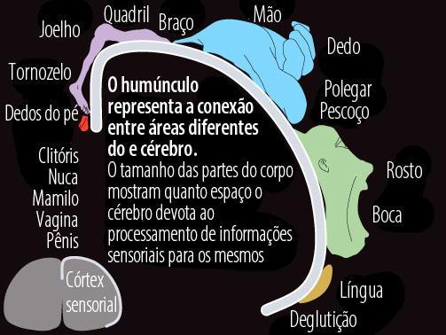 cerebro feminino