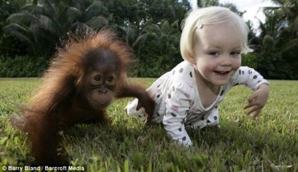 macaco veio do homem