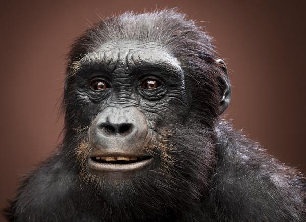 evolução humana ancestrais essenciais
