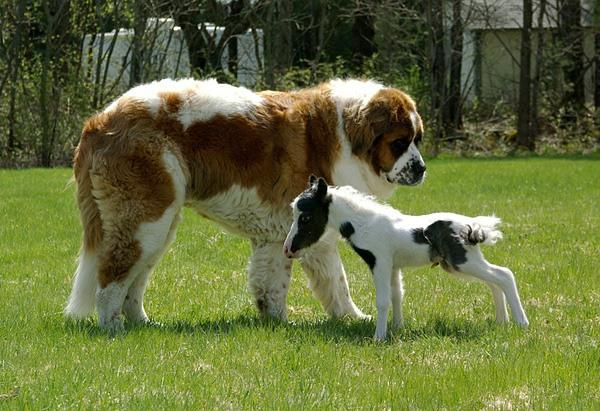 10 animais absurdamente pequenos