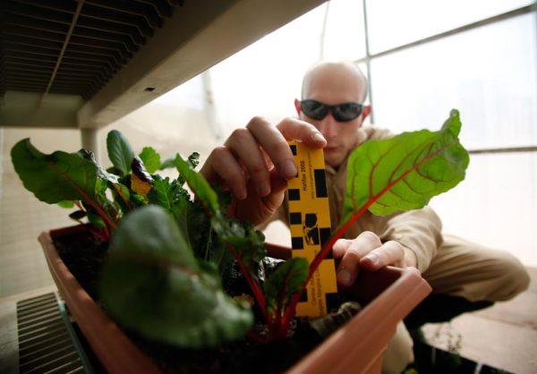 Plantas são cultivadas e estudadas para entender como elas poderiam sobreviver em Marte