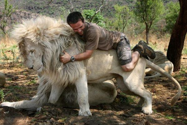 kevin-richardson-lions-002