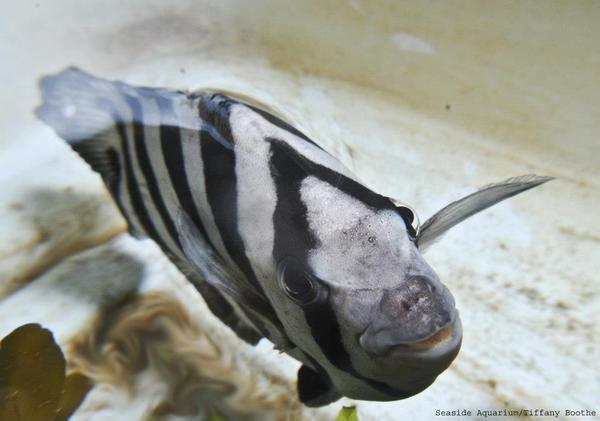 la-na-nn-tsumani-fish-20130406-001