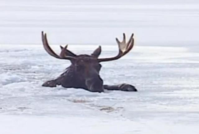 8 vídeos de pessoas corajosas salvando animais