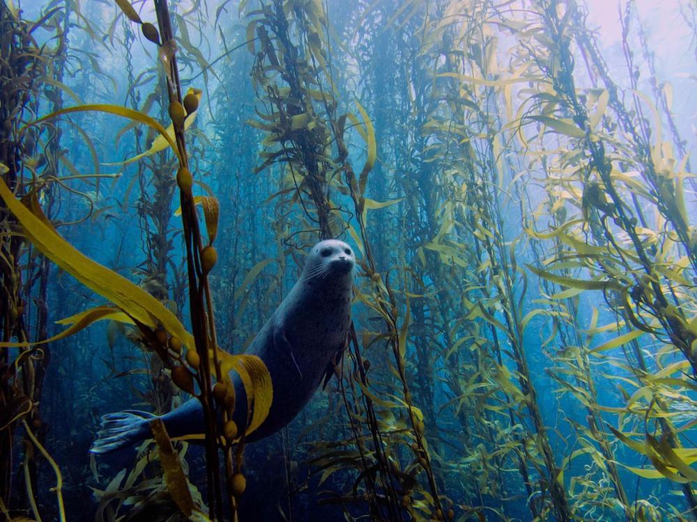 13 espetaculares fotos submarinas