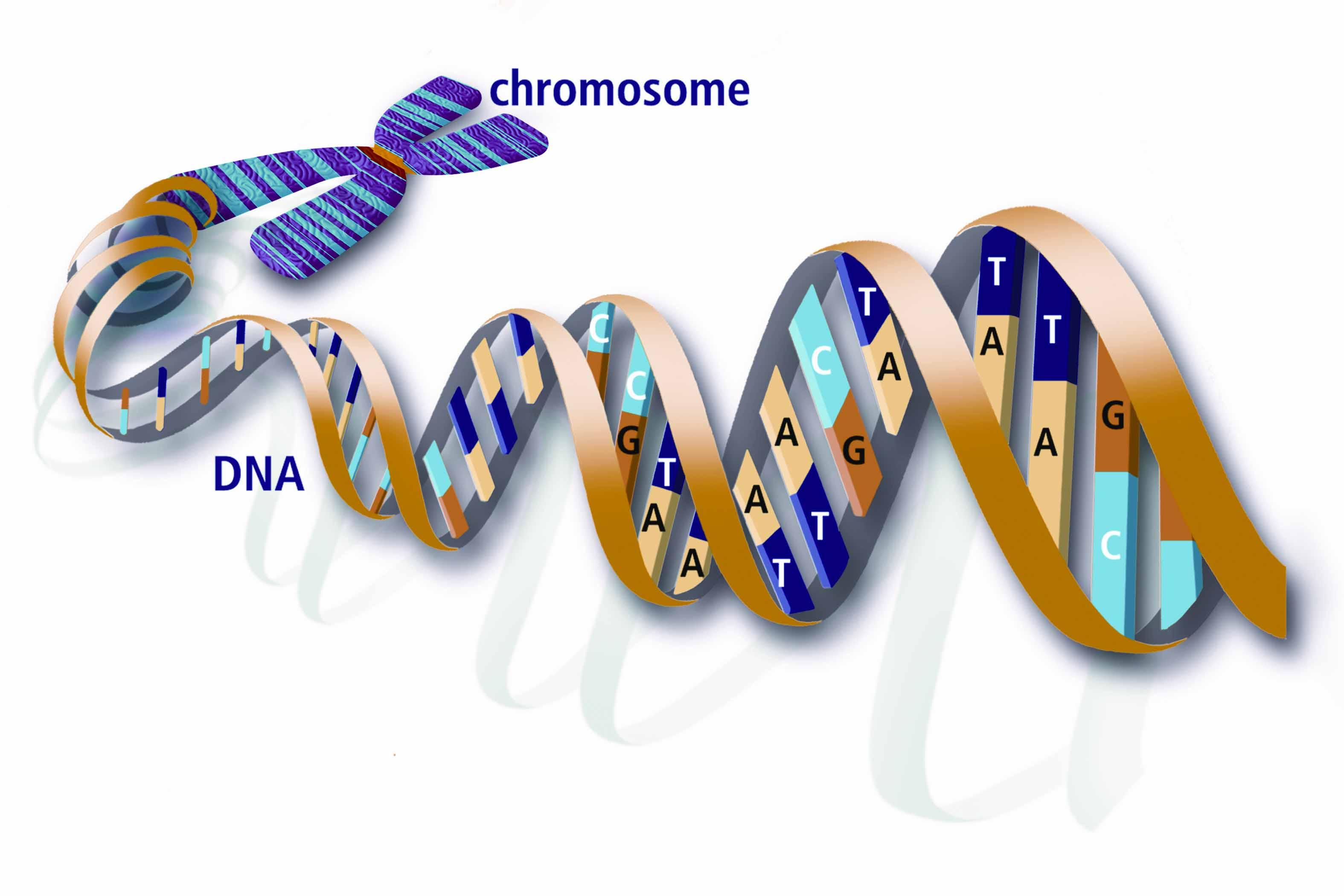 https://hypescience.com/wp-content/uploads/2013/06/DNA-with-Features.jpg