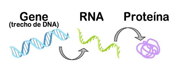 genes o que é