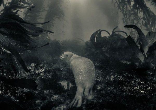 Uma foca repousa, mesmo que apenas por um momento, em seu poderoso reino (Foto: Ralph Pace)