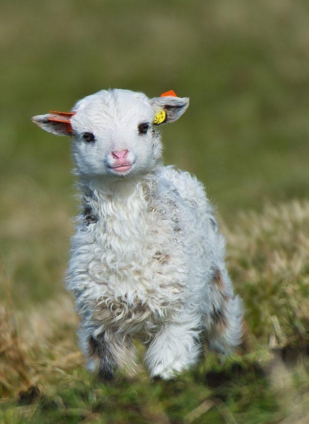 Resultado de imagem para filhotes de animais