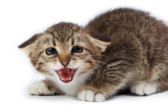 Medicina de prevenção de vermes em gatinhos
