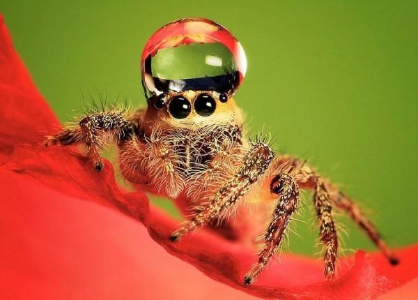 jumping-spider-waterdrop-hats-uda-dennie-5
