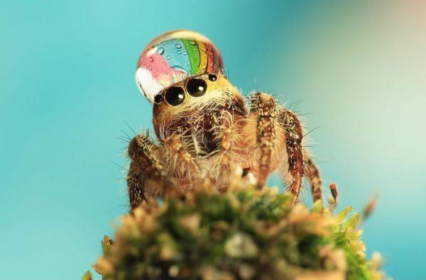 jumping-spider-waterdrop-hats-uda-dennie-6
