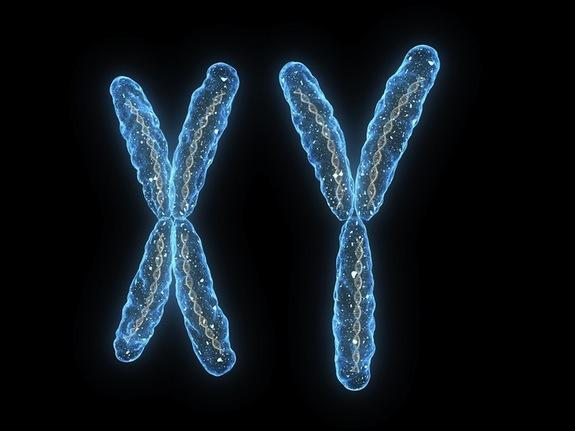 sex-chromosomes-120222