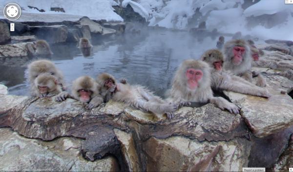 Macacos da neve em Jigokudani Monkey Park, no Japão