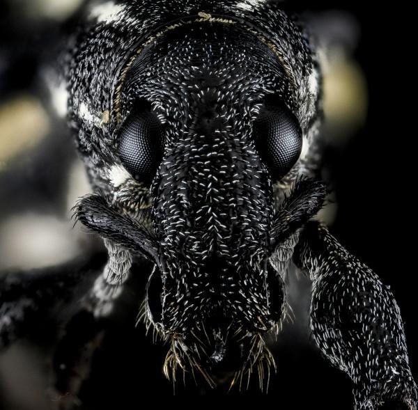 Caruncho de espécie desconhecida, em República Dominicana, 2013