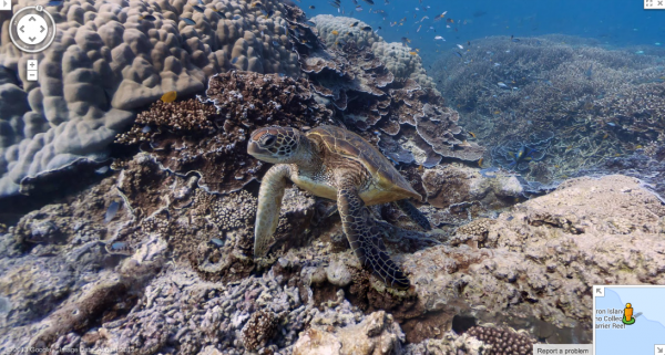 Tartaruga marinha na costa da Ilha Heron, no sul da Grande Barreira de Corais