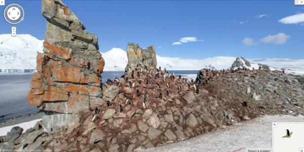 Pinguins na Ilha Half Moon, Antártica