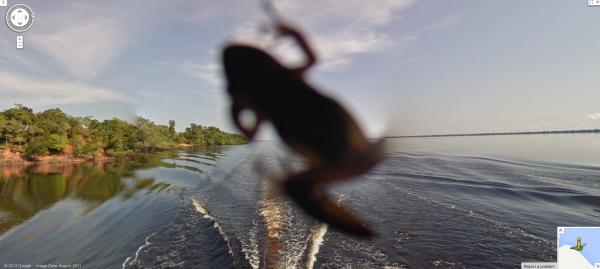 Rã no Rio Negro, na Amazônia brasileira
