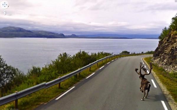 Rena em Lebesby, na Noruega